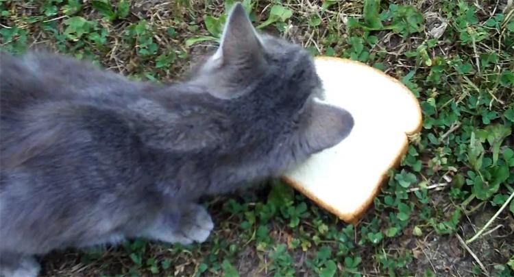 Кошка и хлеб