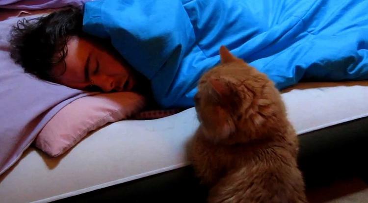 Кошка собирается лечь к человеку