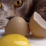 Можно ли котам давать яйца (сырые и варенные)?