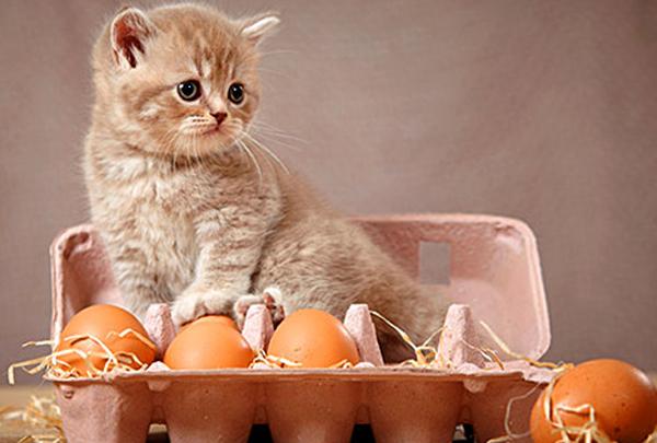Котенок и яйца