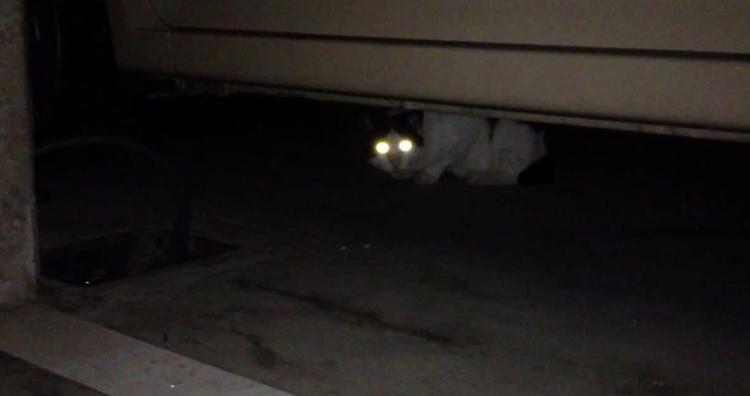 Глаза у кошки светятся