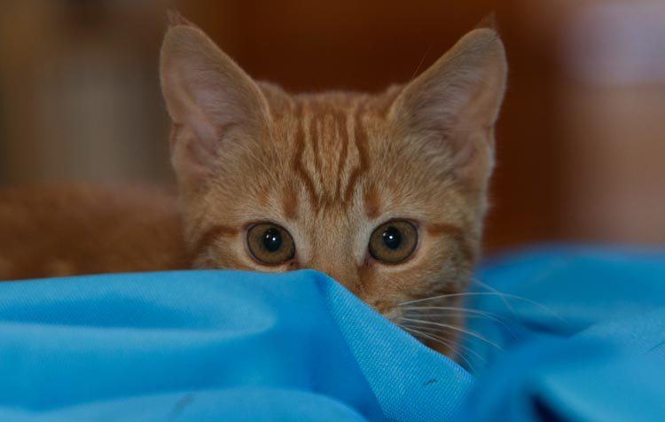 Нервный кот