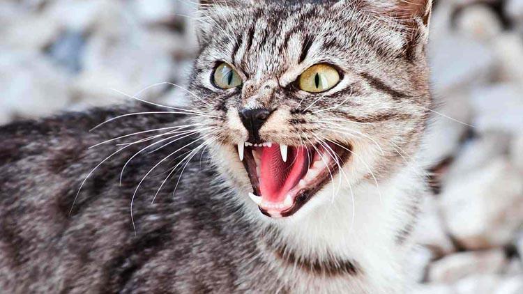 Кот становится агрессивным что делать