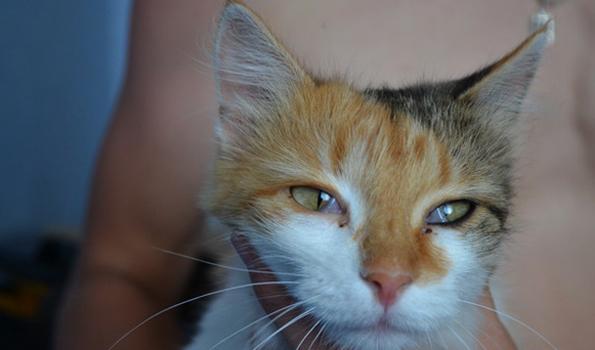 У кота пол глаза закрыто