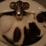 Почему кот любит спать в ванной?