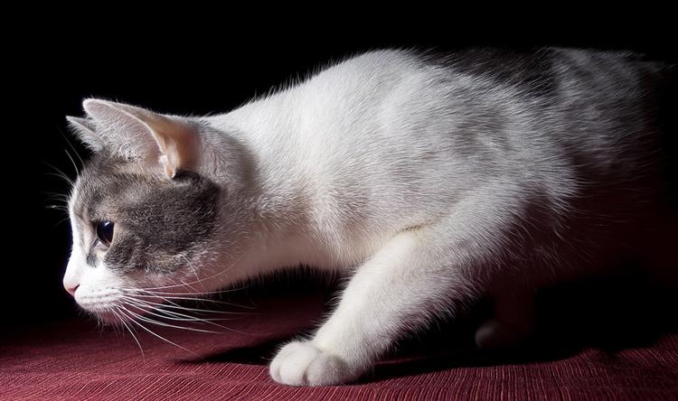 Кот подкрадывается