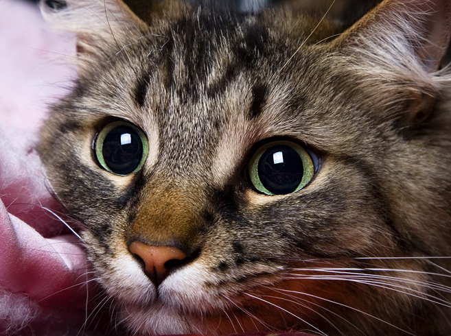Нагадивший кот