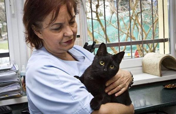 Ветеринарный врач с котом