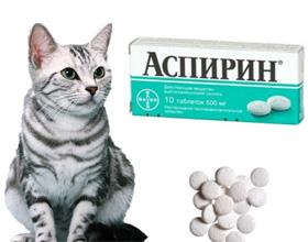 Аспирин кошкам — можно ли давать
