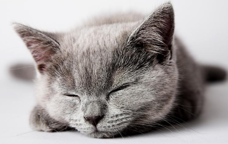 Серенький котенок