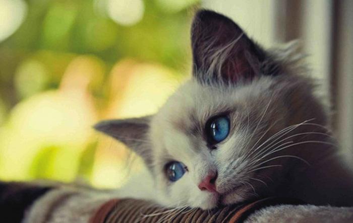 Бедный котенок
