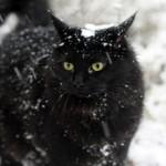 Пониженная температура у кошки — причины и что делать