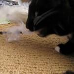 Если кот съел пакет: что делать и нужно ли беспокоиться