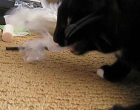 Если кот съел пакет