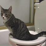 Кот ходит в туалет (писает и какает) с кровью — причины и что делать