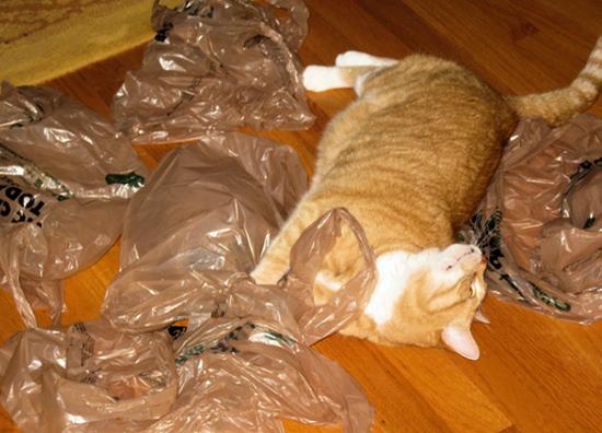 Кот и пакеты