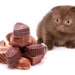 Шоколад для кошек — можно ли давать?