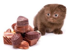 Шоколад для кошек — можно ли давать