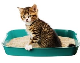 Запоры у котов