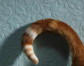 Почему коты дергают хвостом
