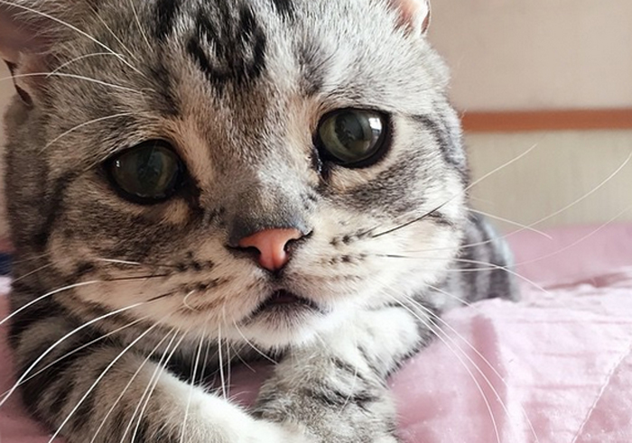 У кота в кале скрытая кровь