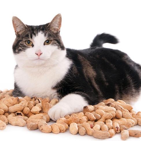Кошечка с орехами