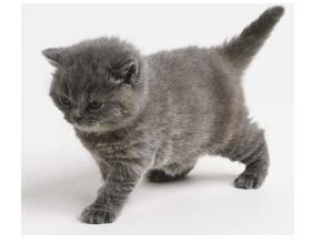 Какую кличку выбрать серой кошке