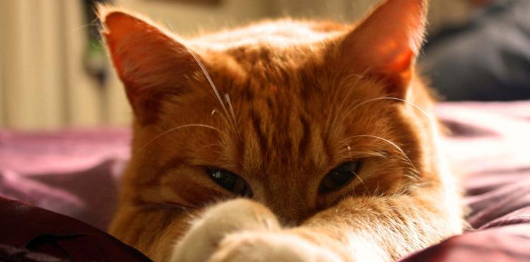 Понос у рыжей кошки