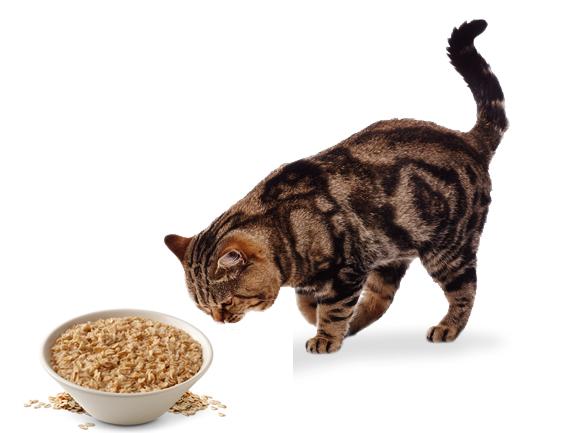 Кошка и овсянка
