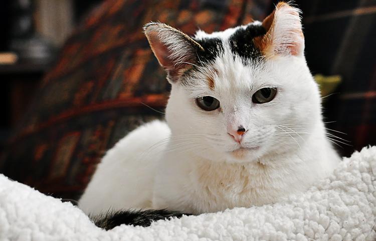 Животик болит у кота