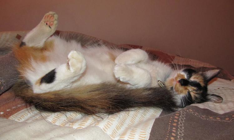 Кот с больным животом