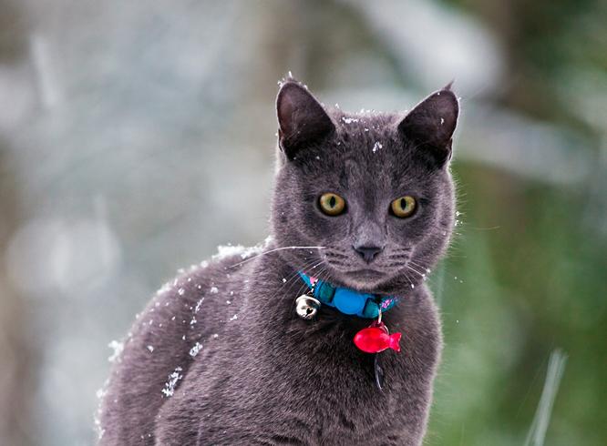 Кошечка на холоде