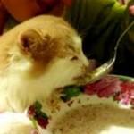 Гречка котам — можно ли давать?