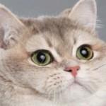Тяжелое дыхание у кошки — причины и что делать