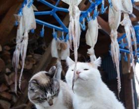 Кальмары кошкам — можно ли их давать