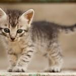 Варианты кличек для девочек кошек (всех пород)