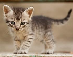 Варианты кличек для девочек кошек