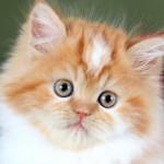 Какую кличку выбрать рыжему коту (мальчику и девочке)