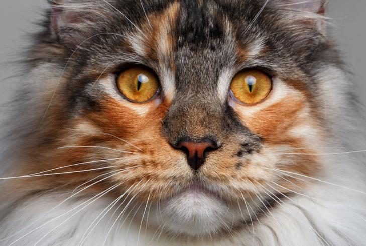 Кот хочет чихать