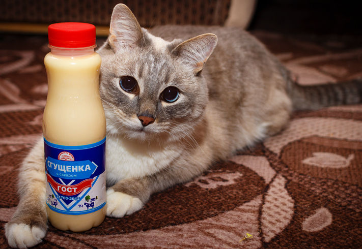 Кот и сгущенка