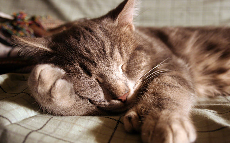 Котик с отравлением