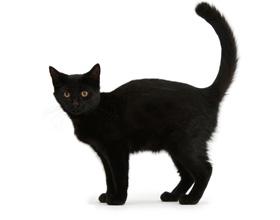 Варианты кличек для черных котов