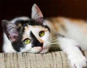 Как лечить гастрит у коту
