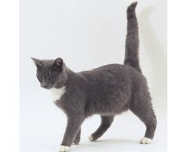 Почему кошки машут хвостом?