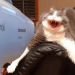 Можно ли сушить кошек феном и как это правильно делать?