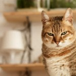 Кот мало ходит в туалет по маленькому: что делать и стоит ли беспокоиться
