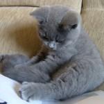 Варианты кличек для мальчиков котов (всех пород)