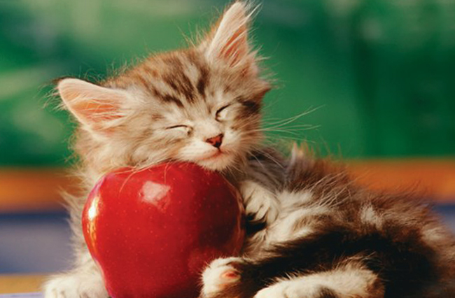 Котенок и яблоко