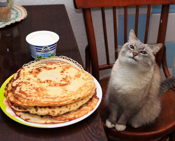 Кот хочет блинчики