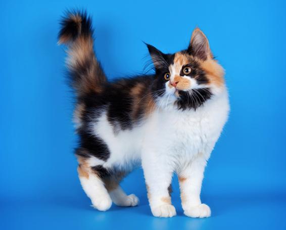 Любопытство кошки